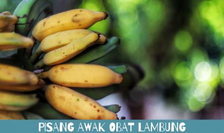 pisang awak obat lambung